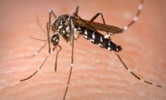 «Los mosquitos nos comen vivos en Velilla», los vecinos exigen medidas