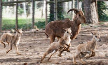 Este sábado reabre sus puertas el zoo de Guadalajara