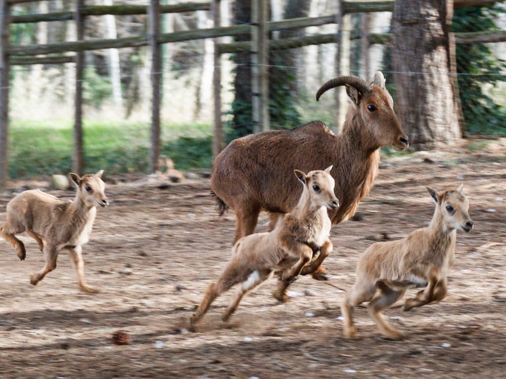 Nacen nuevas crías en el Zoo de Guadalajara