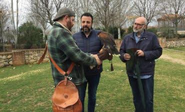 Azuqueca utiliza águilas de Harris para ahuyentar a las palomas