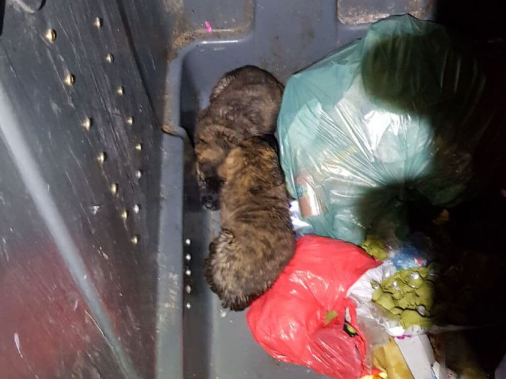 Rescatados dos cachorros de un contenedor de basura en Madrid