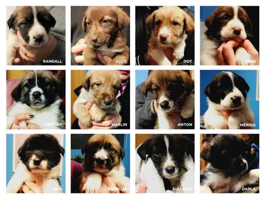 Dejan abandonados a 12 cachorros en mitad del campo en Torrejón