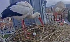 Primer huevo de la temporada de las cigüeñas youtubers de Alcalá