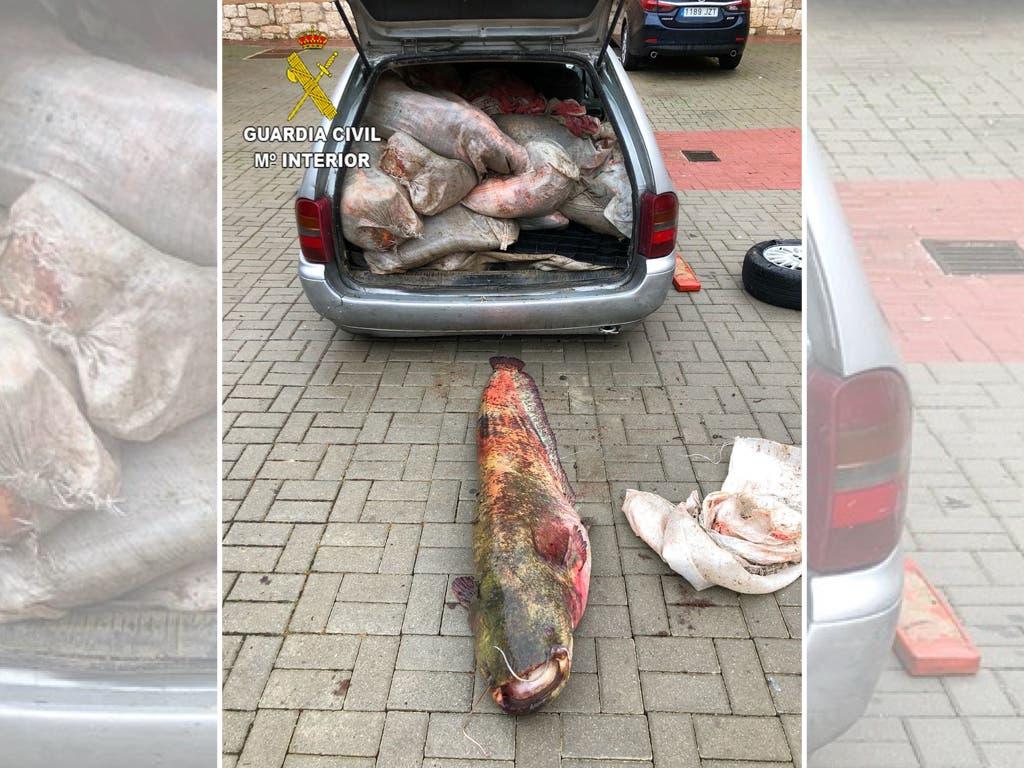 Curioso hallazgo en el maletero de un coche que había pinchado en la A2
