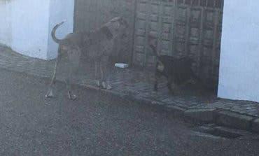 Piden ayuda para localizar al dueño del perro que atacó a un niño en Torrejón del Rey