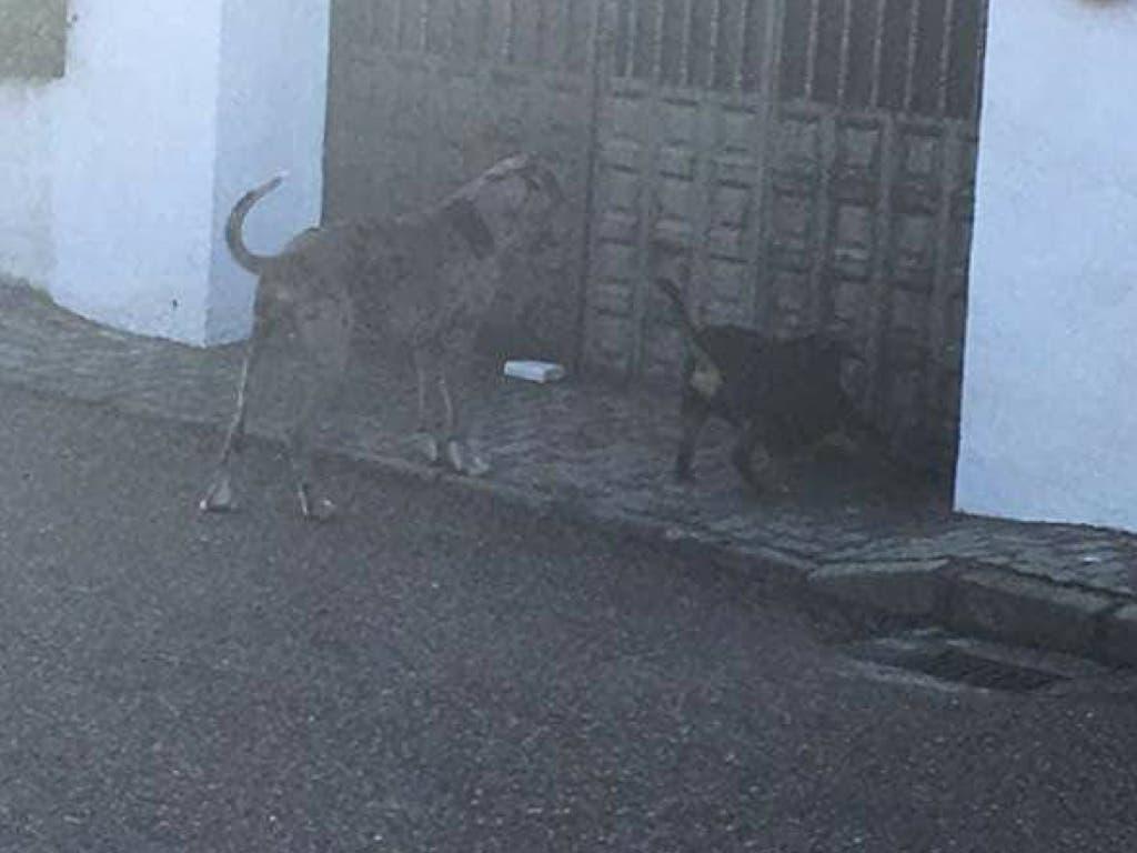 Localizado el dueño del perro que atacó a un niño en Torrejón del Rey