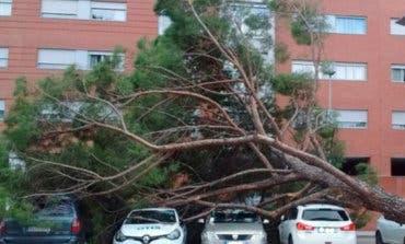 Tremendo susto en Azuqueca de Henares por la caída de un pino
