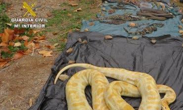 Un juzgado de Arganda investiga a una red de tráfico de reptiles: 600 animales intervenidos