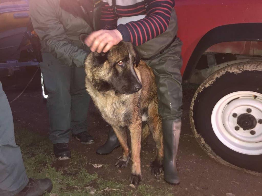 Rex, el perro rescatado en el río Henares