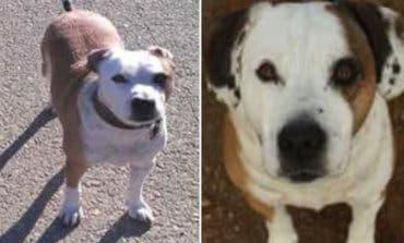 Ofrecen recompensa por un perro perdido en Mejorada del Campo