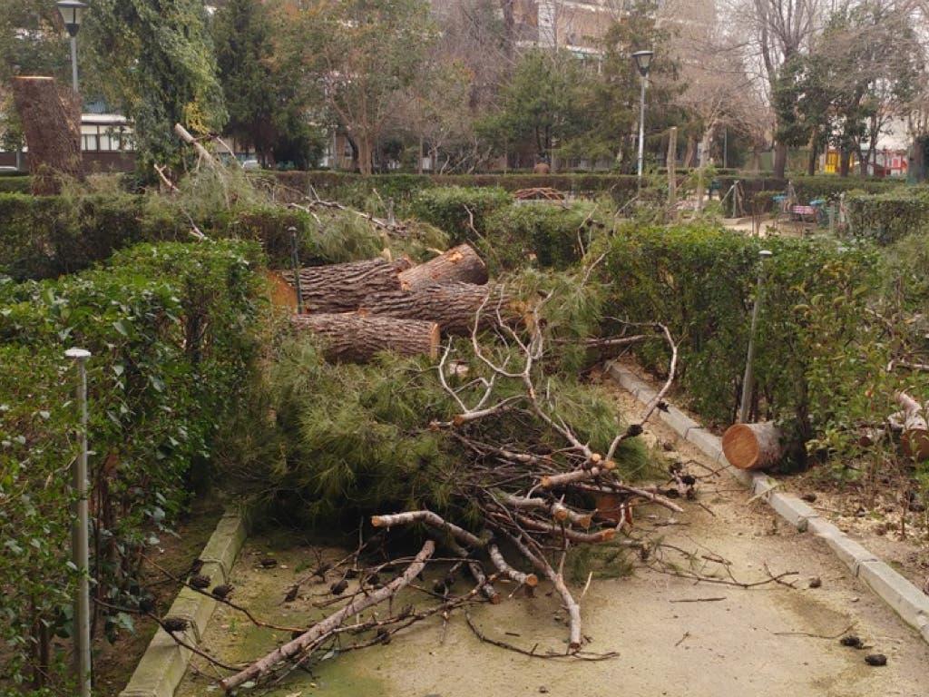 Tala «imprevista» de árboles en el Parque de los Nogales de Alcalá de Henares