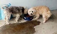 Rescatan a dos perros abandonados en un piso de Coslada