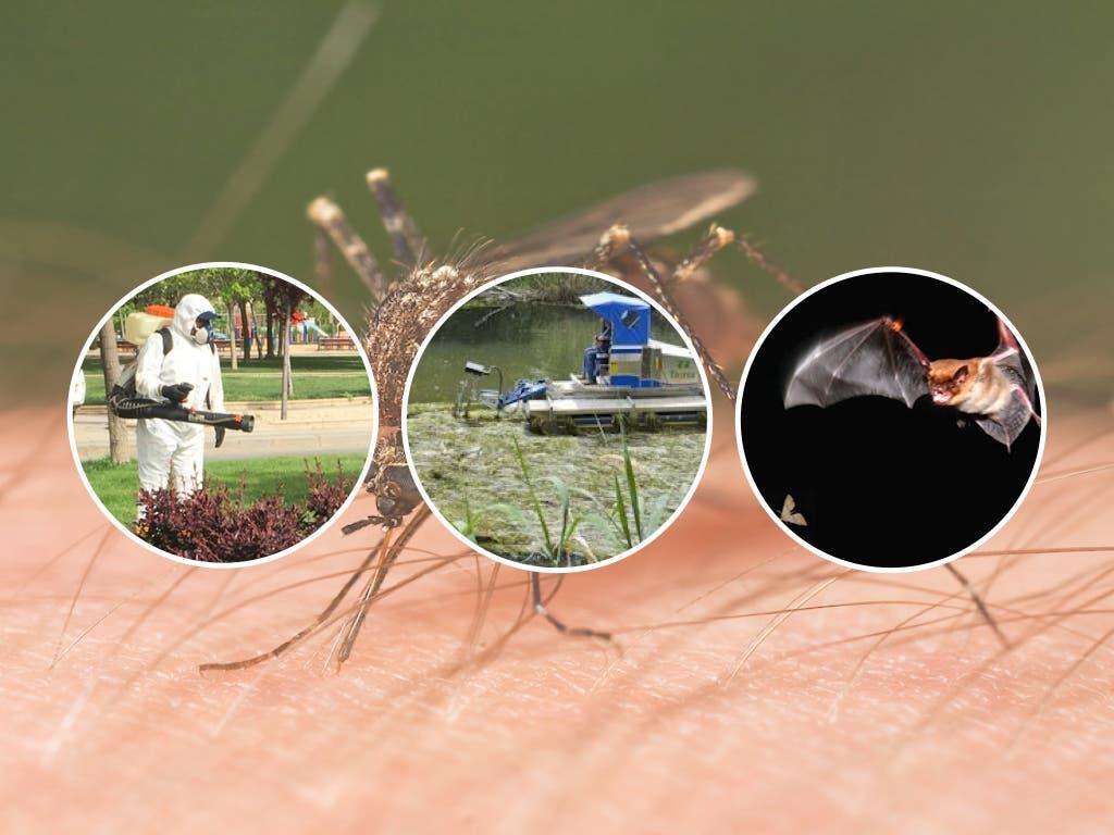 Torrejón comienza la lucha contra los mosquitos por tierra, agua y aire