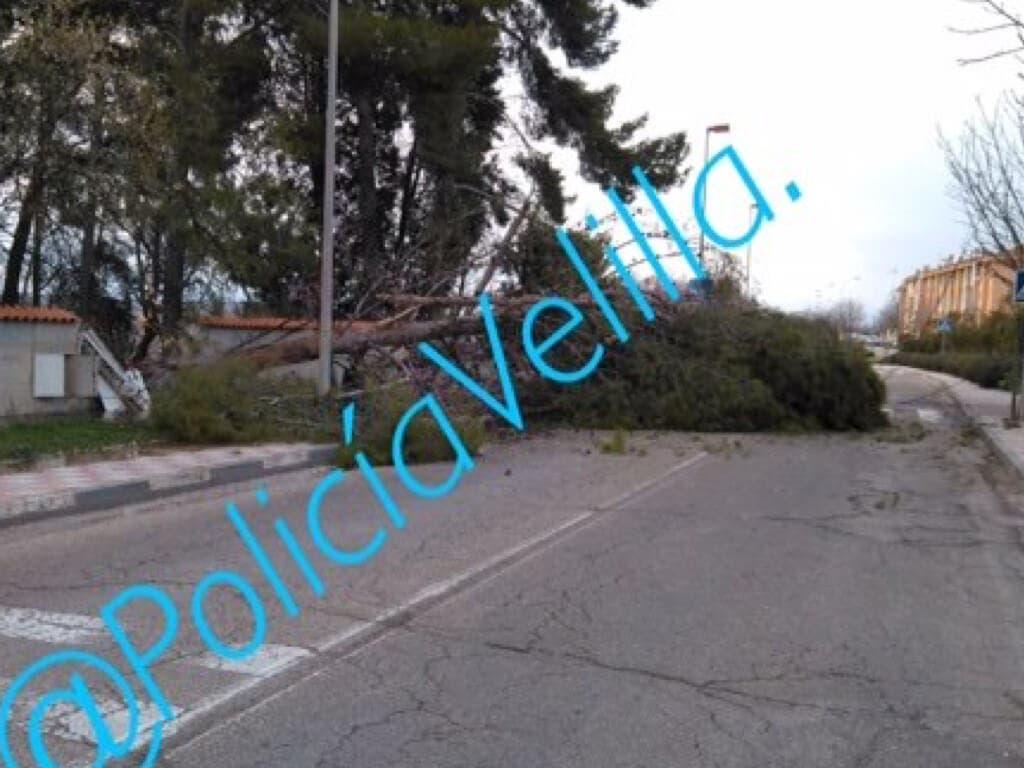 La caída de un pino obliga a cortar una calle de Velilla de San Antonio