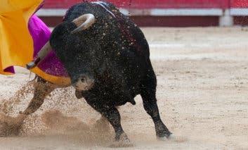 El Ayuntamiento de Alcalá de Henares dice que «no es posible» prohibir los eventos taurinos