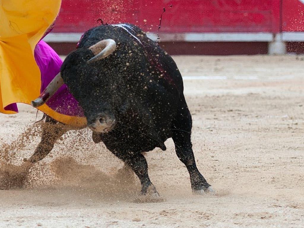 PRIMICIA: El cartel taurino de las fiestas de Torrejón 2018