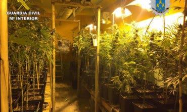 Localizada una plantación ilegal de marihuana en Torres de la Alameda