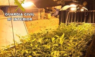 Detenido en Guadalajara por cultivar 1.648 plantas de marihuana en un chalet