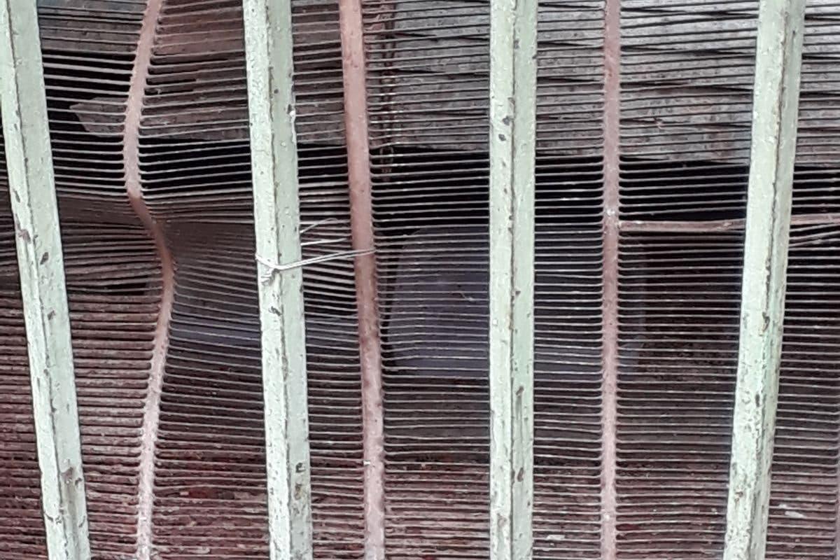 Denuncian la cruel muerte de dos gatos de una colonia en Torrejón