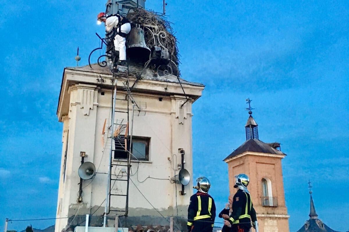 Un polluelo de cigüeña, en peligro en Alcalá de Henares
