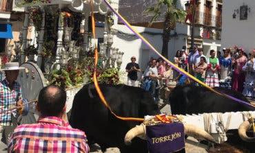 Las hermandades de Torrejón y Alcalá emprenden su camino al Rocío