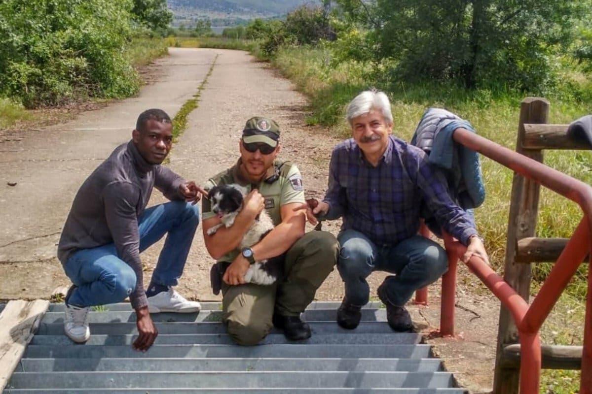 Rescatan a un perro anciano y ciego atrapado en un foso
