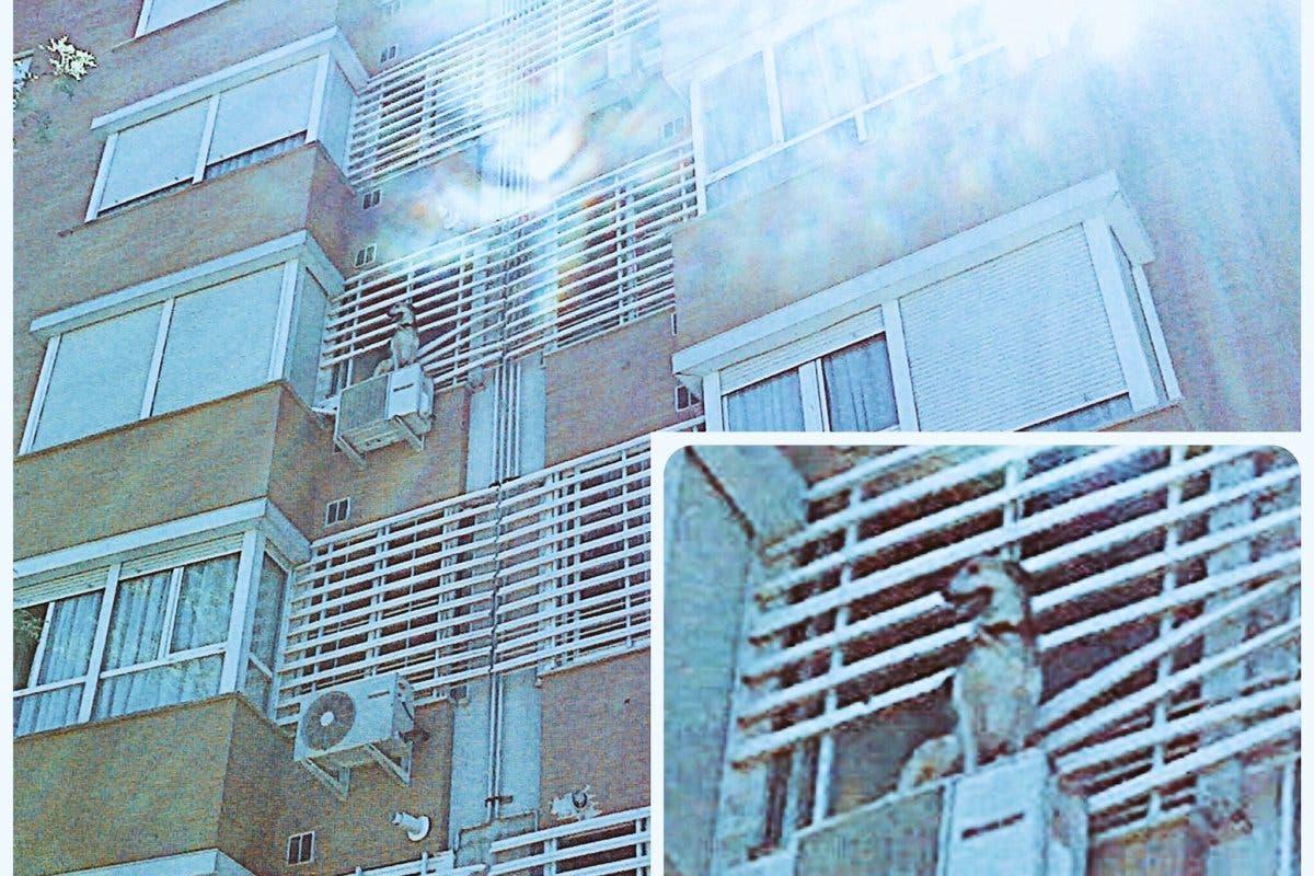 Los Bomberos rescatan a un perro de un aparato de aire acondicionado en Torrejón