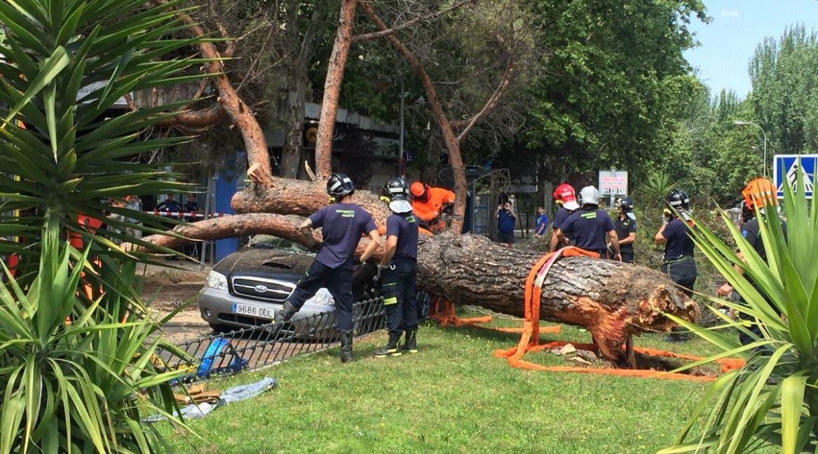 Un árbol de grandes dimensiones cae encima de un coche en marcha