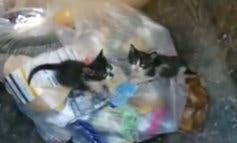 Encuentran en Torrejón tres gatitos tirados en la basura