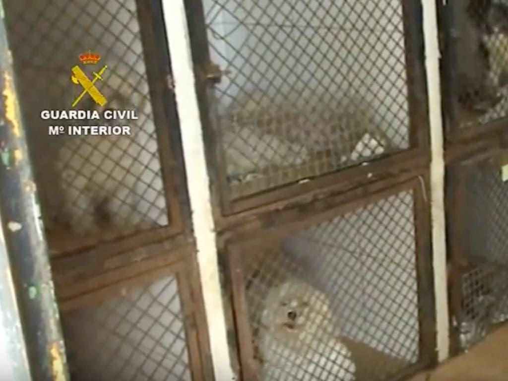 Desmantelado en Paracuellos un criadero ilegal con casi 200 perros maltratados