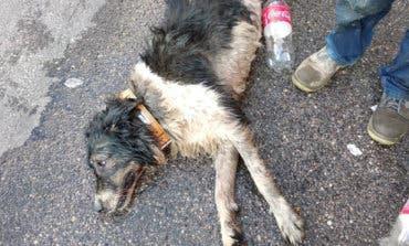 Muere un perro asfixiado de calor en el interior de un coche