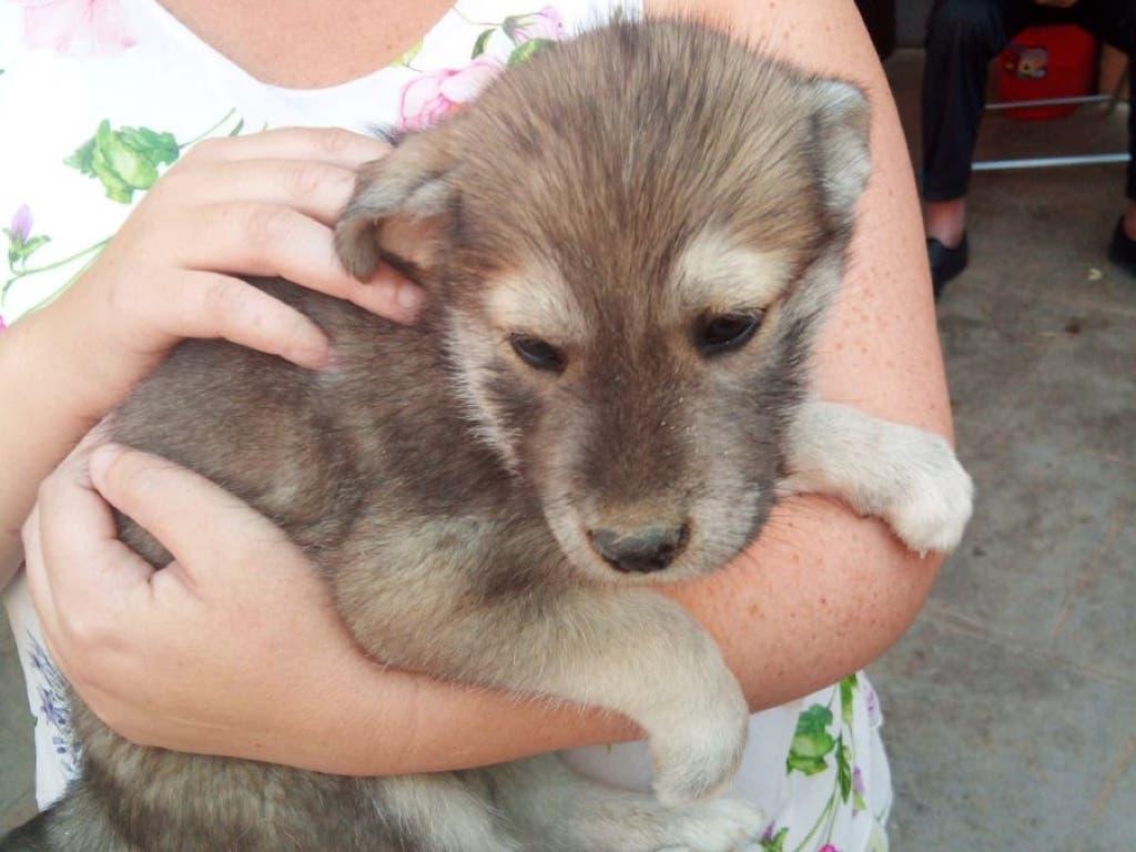 Feliz rescate de un perro atrapado en Pioz