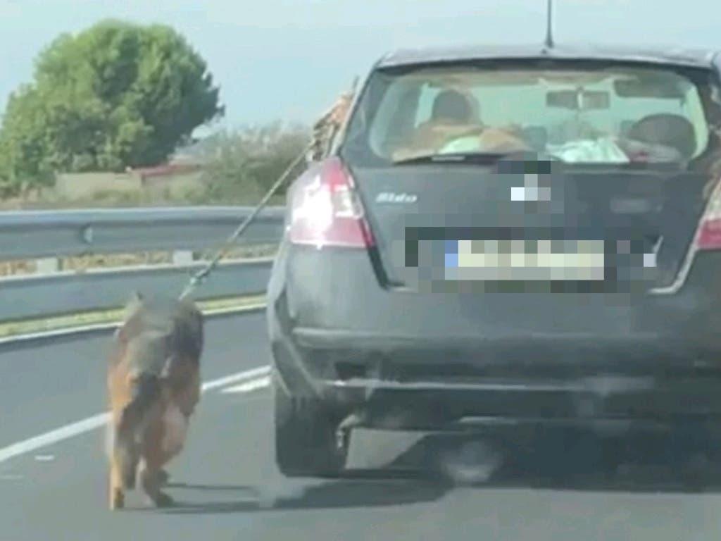 Detenido por circular con su perro atado al coche por una carretera de Meco
