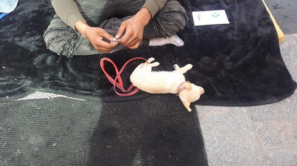 Liberados dos perros en Madrid que eran drogados para mendigar