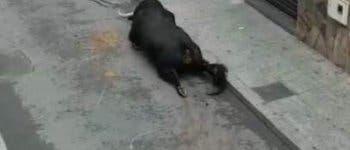 Un toro se rompe las patas en los encierros de Mejorada del Campo