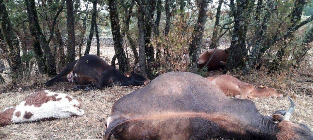 Un rayo mata a nueve reses en la Comunidad de Madrid