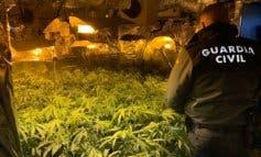 Tres detenidos y844 plantas de marihuana incautadas en Guadalajara