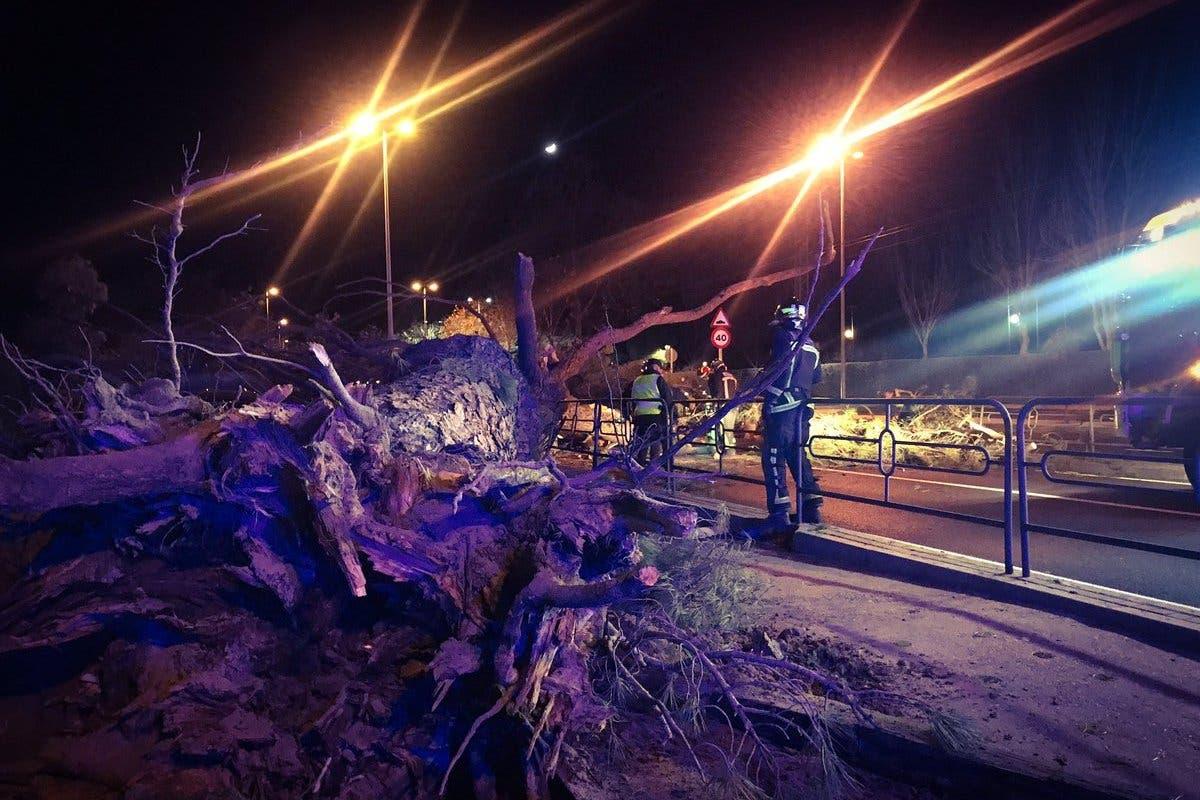 La caída de un árbol deja dos heridos, uno grave
