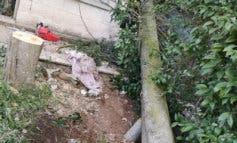 Herido grave al caerle encima el árbol que talaba en Nuevo Baztán