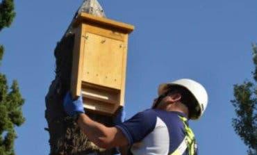 Azuqueca se suma al uso de murciélagos contra los mosquitos