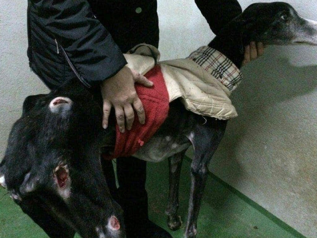 Juzgan a los responsables de la perrera de Alcalá de Henares por maltrato