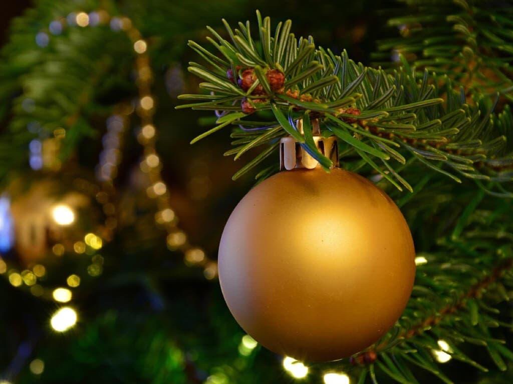 Torrejón recoge árboles navideños para replantarlos en las zonas verdes de la ciudad
