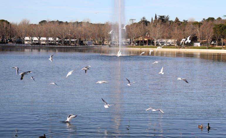 Reabre al público el lago de la Casa de Campo tras 12 meses de obras