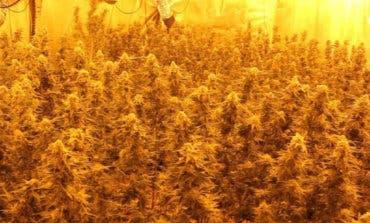 Detenidos dos vecinos de Alcalá y Torrejón por cultivar marihuana en Algete