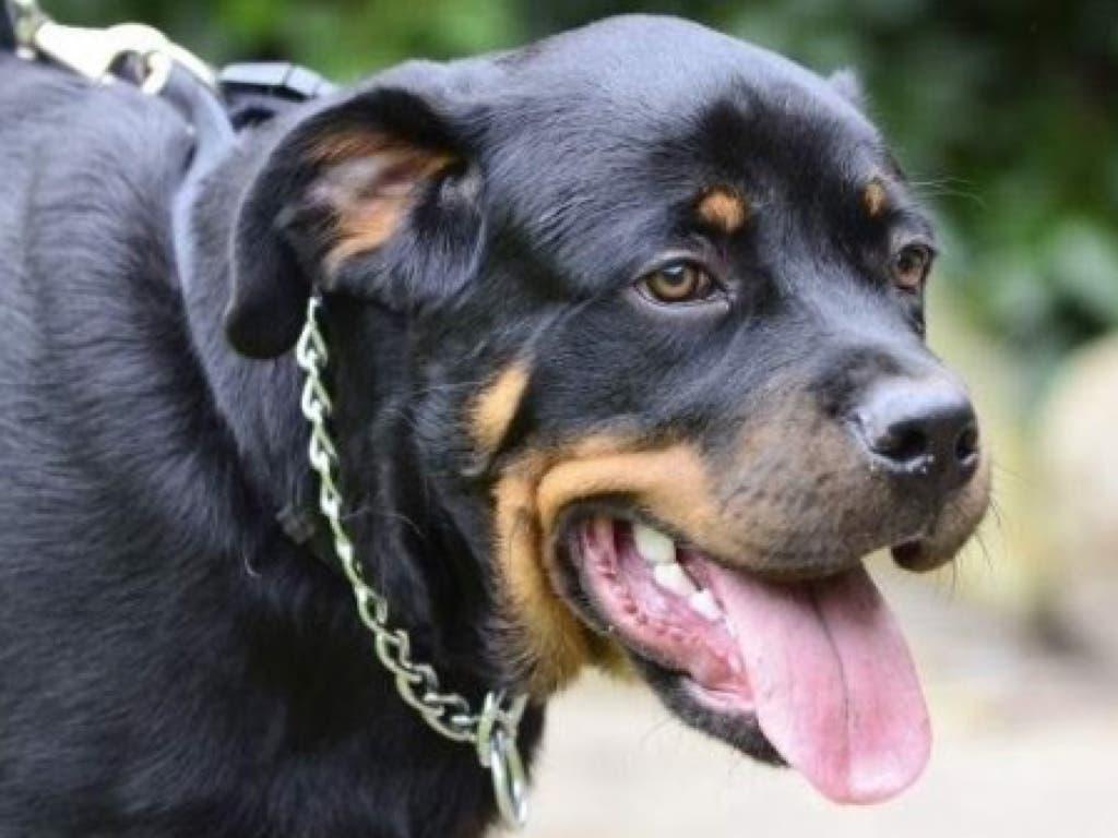 En libertad con cargos el dueño de los perros que mataron a un anciano en Vallecas