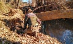Agentes Forestales capturan mapaches abandonados en los ríos Henares y Jarama