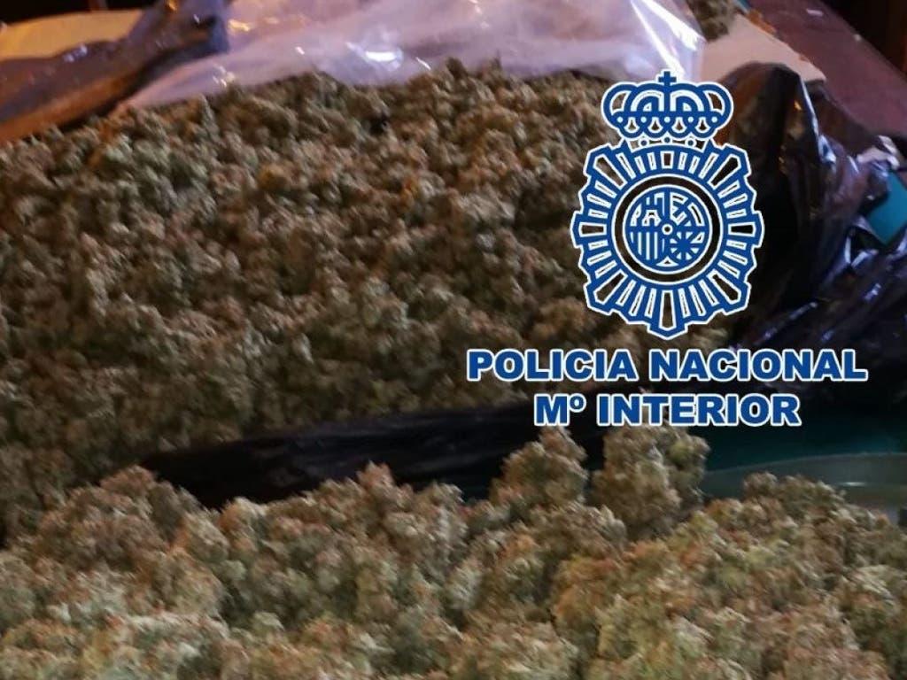 Cae una red que cultivaba marihuana en Alcalá de Henares