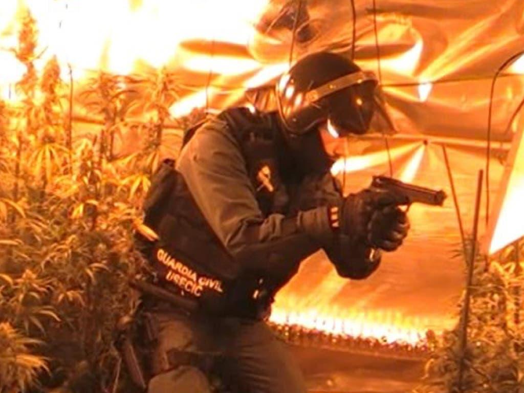 Detenidos dos vecinos de Alcalá de Henares por cultivar marihuana en Pioz