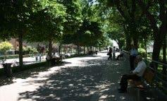 Coslada planta más de 600 árboles en diferentes puntos de la localidad
