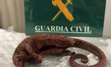 Detenida una vecina de Torrejón en Barajas con varios animales muertos en su maleta